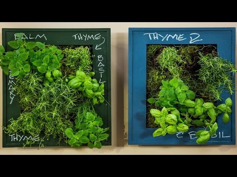 Curious About Herbs? Read The Following Article
