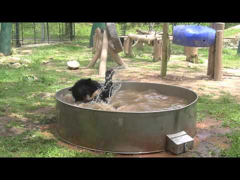 Moon Bear Playtime