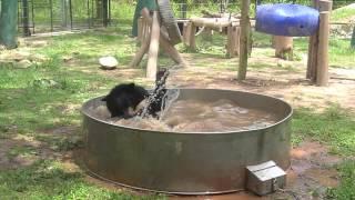 Moon Bear Playtime