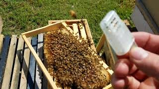 Video How the bees act when they reject the queen new beekeepers don't miss this MP3, 3GP, MP4, WEBM, AVI, FLV Agustus 2019