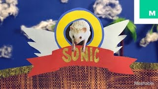 Sonic the Hedgehog in Real Life
