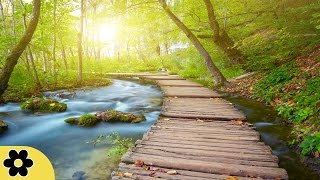 Healing Meditation Music, Relaxing Music, Calming Music, Stress Relief Music, Peaceful Music, ✿2841C - Our relaxing Meditation Music is perfect for Deepak Ch...