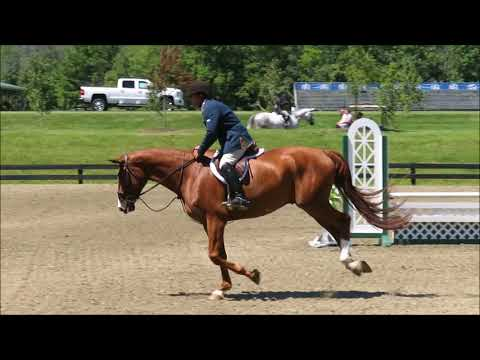 FOR SALE-Caro HITS Green Hunter Debut