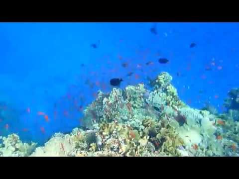 Red Sea under the Sea in Marsa Alam
