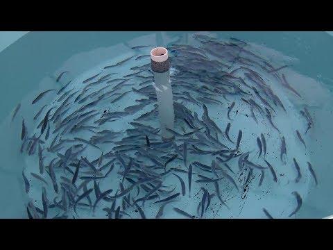 Closed containment – The future of fish farming