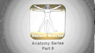 Anatomy - Skeletal Muscles YouTube video