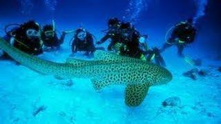 Turismo Subacuático Phuket Tailandia - Underwater Tourism In Phuket Thailand