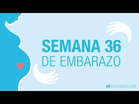 Semana 36 de embarazo | 36 semanas de embarazo | El embarazo semana a semana