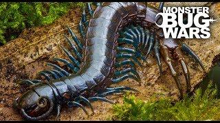 Video Best Centipede Showdowns | MONSTER BUG WARS MP3, 3GP, MP4, WEBM, AVI, FLV November 2018