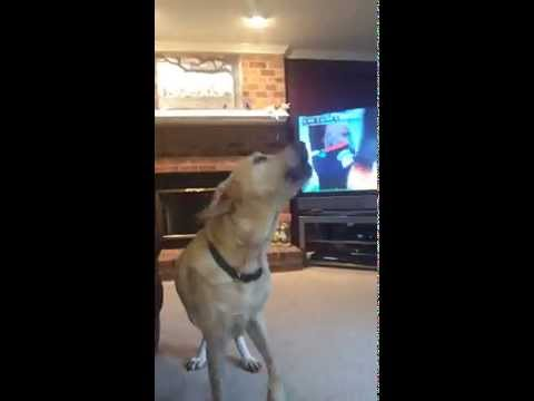 Dogs enter Howling competition 5 month old wants to