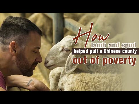 How lamb and spud helped pull a Chinese county out of poverty