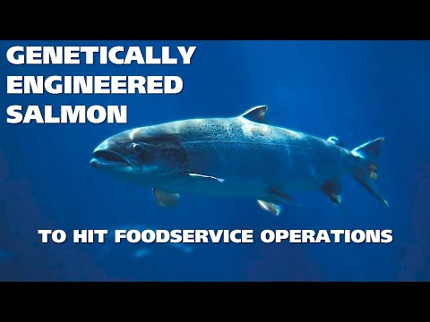 3MMI - Genetically-Engineered Salmon To Hit Foodservice Operations