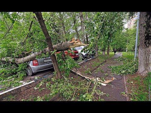 Девочка погибла во время урагана в Москве - DomaVideo.Ru