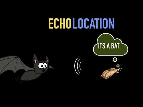Echolocation & S.O.N.A.R