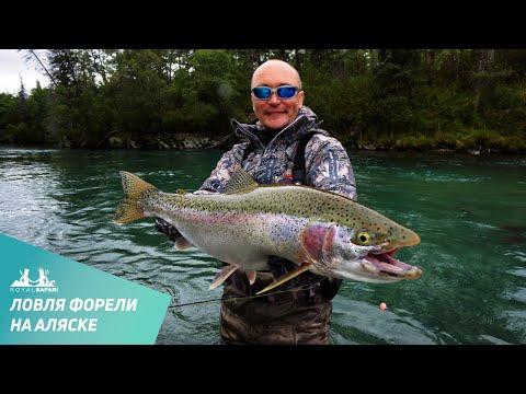 ловить лосось видео