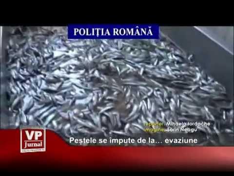 Peștele se împute de la… evaziune