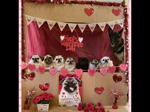 #ValentinesDay! Wait for it...Happy Valentines Day from Pugs & GSD