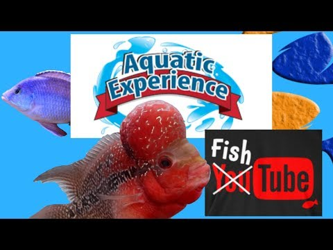 Lets Talk About The Aquatic Experience, 2 New Aquarium Set Ups and Some Q&A? Tank Talk Live!!_Akvárium