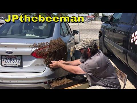 Huge Honey Bee Swarm On Young Lady's Vehicle