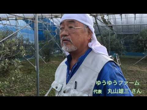 今が旬の幻のフルーツ『フェイジョア』を知っていますか? 〜 福島県いわき市 ゆうゆうファーム 〜