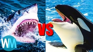 Video Top 10 SAVAGE Animal Rivalries MP3, 3GP, MP4, WEBM, AVI, FLV Oktober 2017