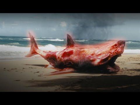 The Shark Scale: Atomic Shark