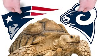 REPTILES PREDICT SUPER BOWL WINNER!! ITS A LOCK!!   BRIAN BARCZYK by Brian Barczyk