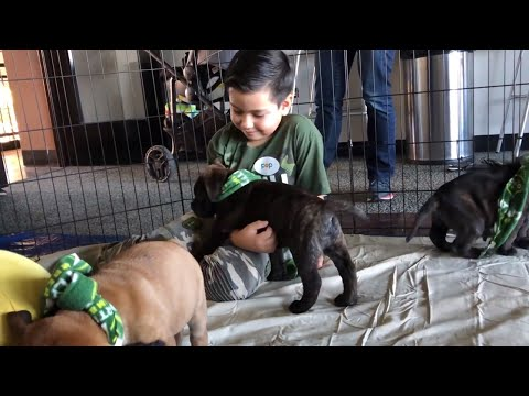 Video: Timbers set goalkeeper Derrick Tellez up with Pile of Puppies; Tellez launches GoFundMe
