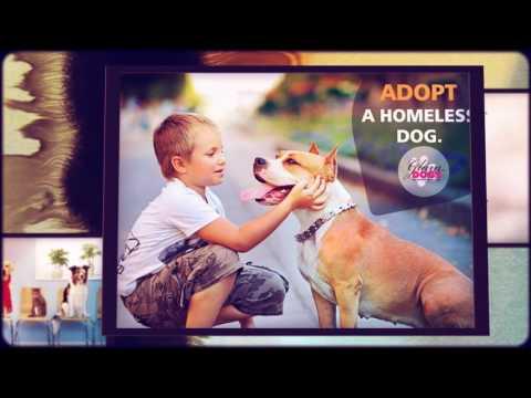 GLAM DOGS-DOG SHOW Sunday 19  Feb 2017