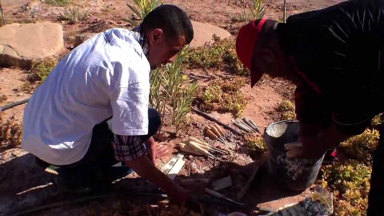 Planting 350 tress at the FPO university in Ouarzazate