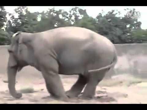動物搞笑影片!(不信你不笑 )