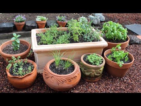 , title : 'How to Plant a Culinary Herb Garden! DIY Kitchen Garden'