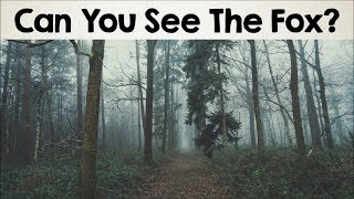Video Nobody Can See All The Hidden Animals । Optical Illusions । Brain Teasers [#2] MP3, 3GP, MP4, WEBM, AVI, FLV Juni 2017