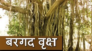 Subscribe to this channel and stay tuned:http://bit.ly/UltraBhaktiBargad Ka Vriksh  Banyan Tree Significance  Kamlesh UpadhyaySpeaker : Kamlesh Upadhyay (Haripuri)