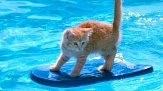 Video 1% CHANCE that these animals WON'T MAKE YOU LAUGH! - Funny ANIMALS IN POOLS videos MP3, 3GP, MP4, WEBM, AVI, FLV November 2018