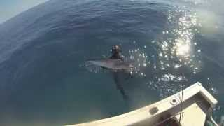 Mission Beach Australia  city pictures gallery : Spearfishing Australia -Mission beach [HD]