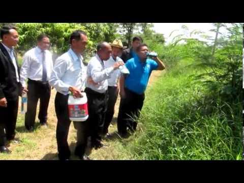 ชีวภัณฑ์ ยาฆ่าหญ้าปลอดสารพิษ (รวมวีดีโออมพ่นทั่วไทย)