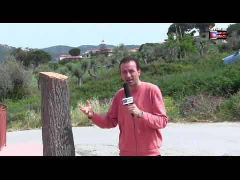 Patti, inspiegabile taglio di alberi