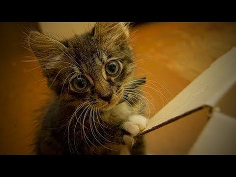 Funny cat videos - Cute Funny Kittens  Funny Cats (Part 2) [Funny Pets]