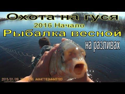 смотреть рыбалка на толстолоба