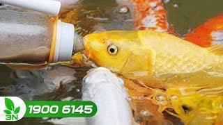 Thủy sản | Khẩu phần ăn của cá trắm và cá chép thương phẩm