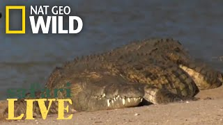 Safari Live - Day 169 | Nat Geo Wild by Nat Geo WILD