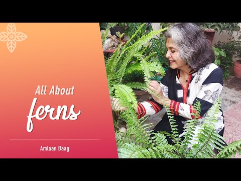 All About Fern | 12 Important Aspects | Types, Care, Propagation, Tips