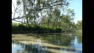 Berri Australia  city images : Exploring by kayak near Berri South Australia.