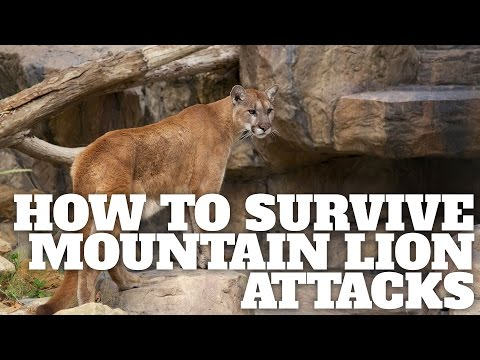 Video How to Survive Mountain Lion Attacks download in MP3, 3GP, MP4, WEBM, AVI, FLV January 2017