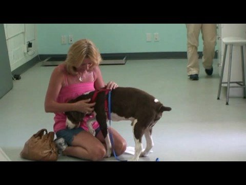 一只沒有希望癱瘓的狗狗被送到復健診所,當主人再到診所時,眼前的一幕讓她的眼淚不自禁地流下來了…