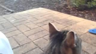 Cat talked to bird