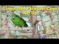Lineolated Parakeet Cage Set Up