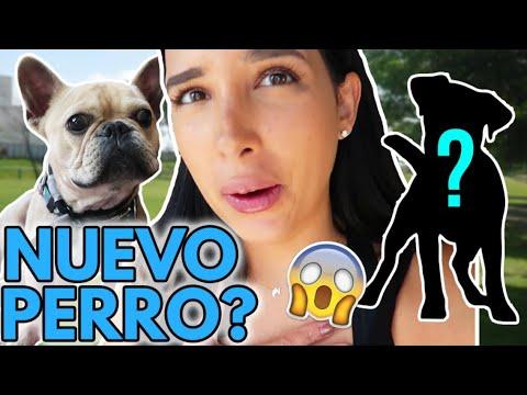 NOS CAMBIARON AL PERRO BURRITO REGRESA DE SU ENTRENAMIENTO?? 12 Sept 2018