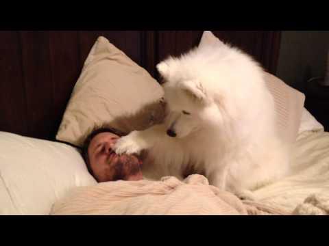 Su Patron Esta Durmiendo Y él Lo Despierta En El Modo Mas Dulce